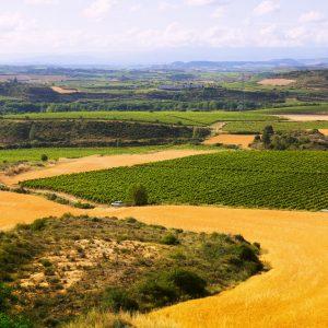 Rural landscape in summer. La Rioja, Spain